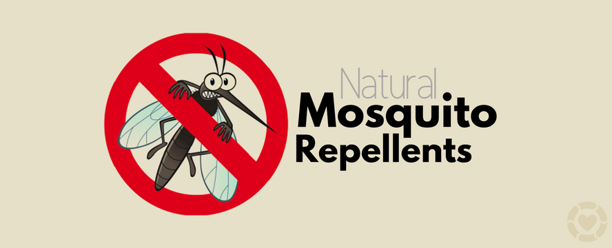 Natural Mosquito Repellents | ecogreenlove