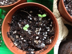 Gardening tips: How to Save & Store Seeds | ecogreenlove