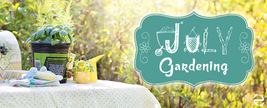 What to sow and grow in July | ecogreenlove