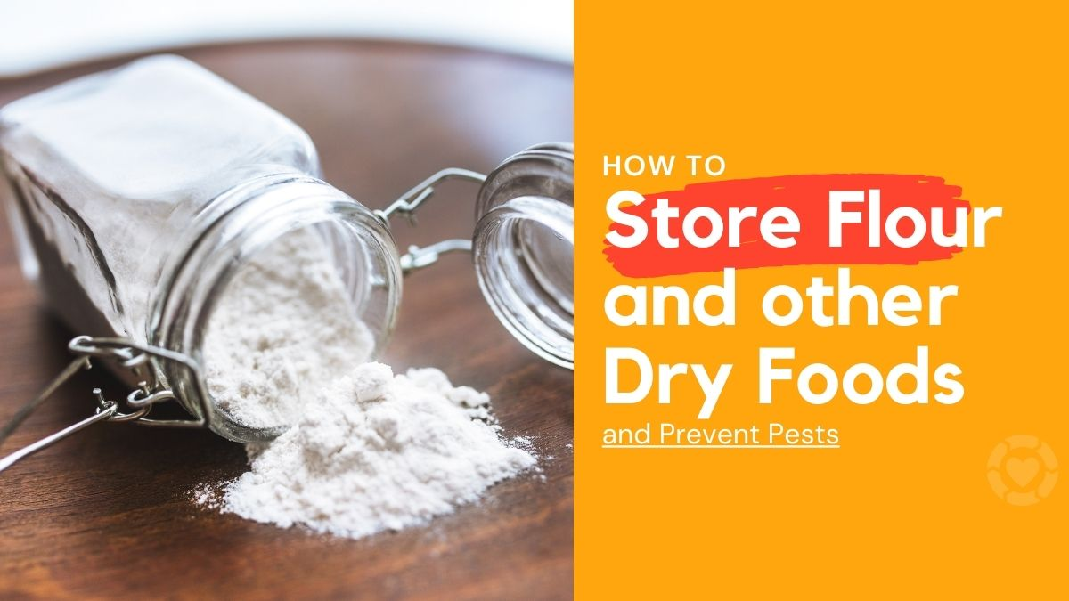 How to store Flour (and other dry foods) and prevent pests | ecogreenlove
