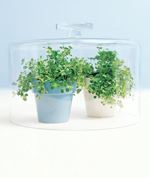 Put your cake dome to good use as a terrarium. Covering small potted plants will help speed their growth. And when birthdays roll around you can remove the plants and use it for cake.