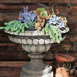 Try this pretty display that isn't just for the birds. Plant shallow-rooted succulents in the birdbath with soil. The lack of drainage will keep the soil moist, so you'll need to water even less frequently than usual.