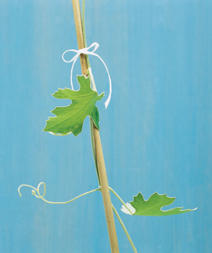 Because it's resilient, dental floss is ideal for training vines on a trellis. Be careful not to tie the floss too tightly or it will dig into the growing stem.