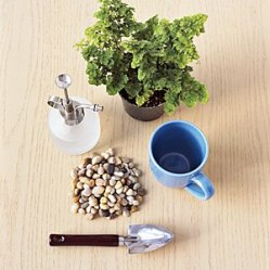 Wish your new houseplant's container was as pretty as the plush green leaves on top? Upgrade the nursery pot's standard green or terra-cotta vessel by swapping it for a brightly colored mixing bowl or coffee mug. Here's how to do it: Step 1: Choose a vessel that is taller than it is wide and a plant, such as a fern or a philodendron, that flourishes in damp soil. Step 2: Unless you want to break out the drill, fill the bottom third of the container with pebbles to allow for drainage. Step 3: Spread a layer of potting soil on the pebbles so the roots won't touch rock. Set the plant and top off with more soil.