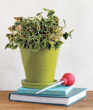 Bail out a waterlogged plant by suctioning excess water from the pot's base.