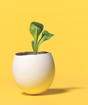 Using a pin, poke a hole in the bottom of an empty eggshell half, put it in an egg carton (for stability), and fill with soil and seeds. Once your seedling appears, plant the whole thing in the ground. The eggshell will disintegrate and nourish the soil.