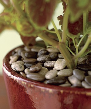 Insulate potted plants with a layer of decorative pebbles on top of the soil.