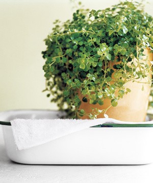 Keep your plants hydrated. If you're going away for a week or so, place a towel in a bathtub or sink and fill with about two inches of water. Then thoroughly water the houseplants, and place them on top of the towel. They'll soak up the water.