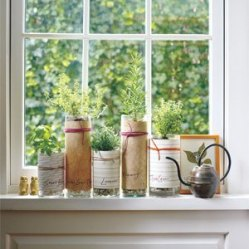 Assemble an herb garden. Fill the bottom of the vase with pebbles (for drainage) before transferring small potted greens.