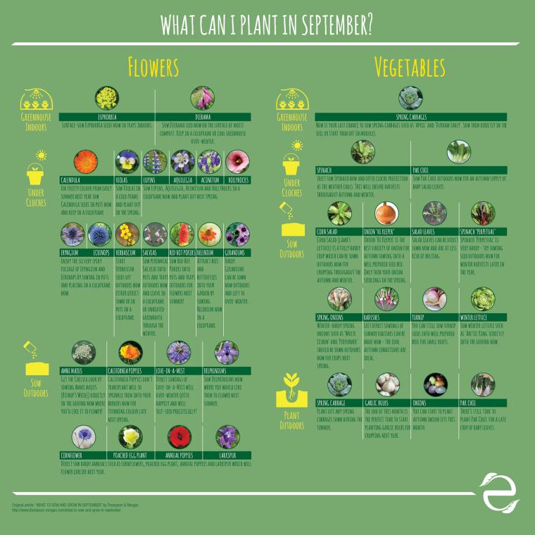 ecogreenlove_whatcanIplantSEPT