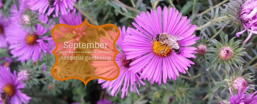 Seasonal Gardening in September [Infographic] | ecogreenlove