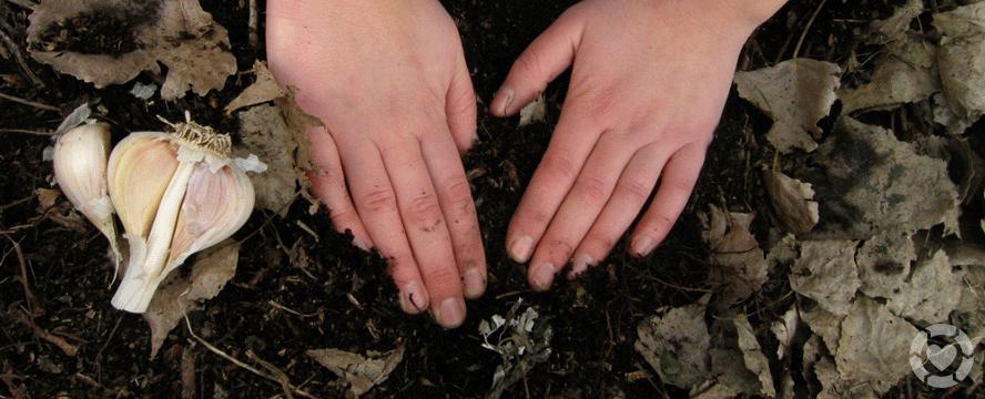Fall Gardening Tips for Beginners | ecogreenlove