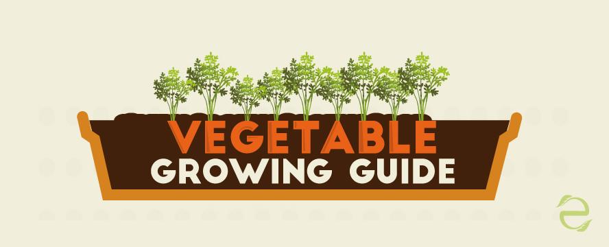 vegetableGrowing_ecogreenlove
