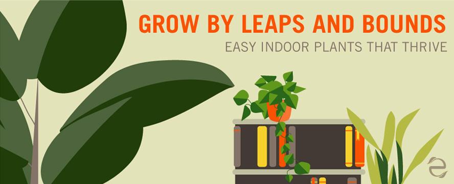 indoorPlants_ecogreenlove