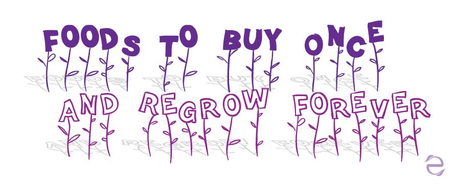 regrowScraps_ecogreenlove