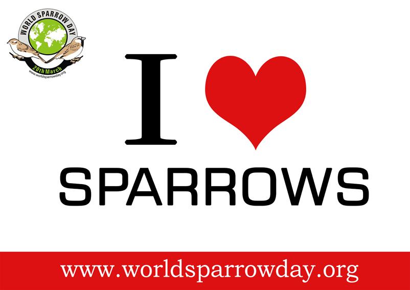 i love sparrows