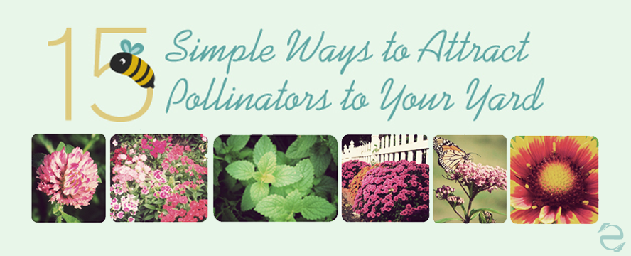 How to attract Pollinators [Infographic] | ecogreenlove