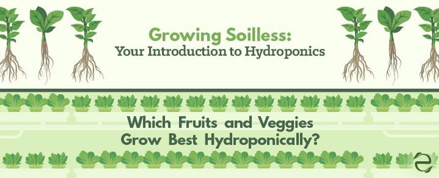 Hydroponics Infographic | ecogreenlove