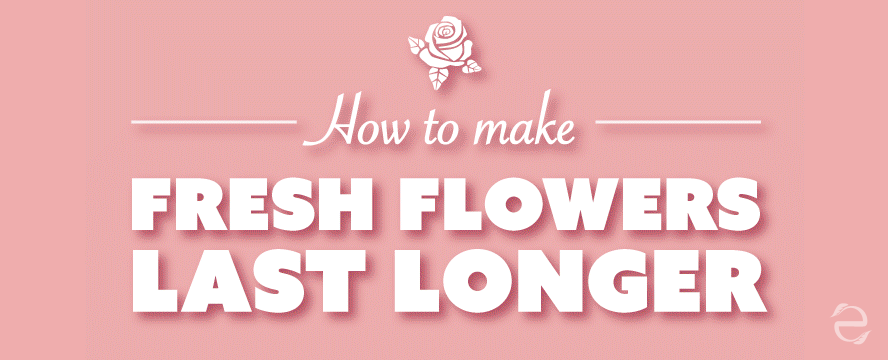 How to Make Fresh Flowers Last Longer [Infographic]