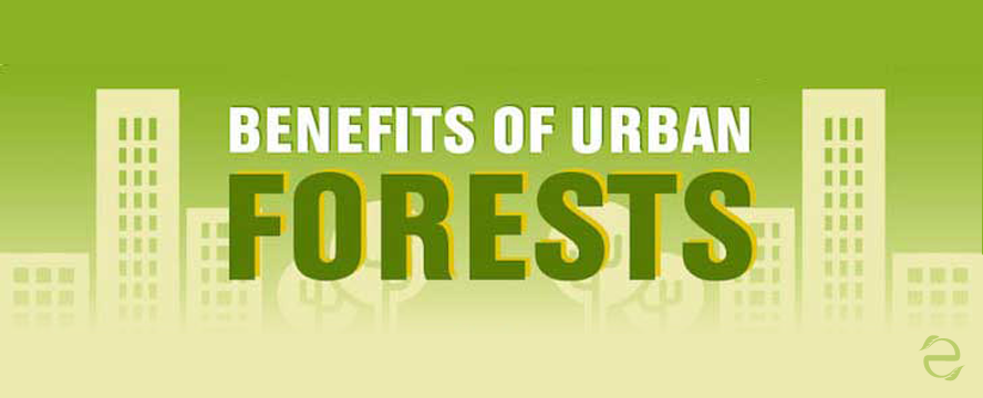Urban Forestry Benefits [Infographic] | ecogreenlove