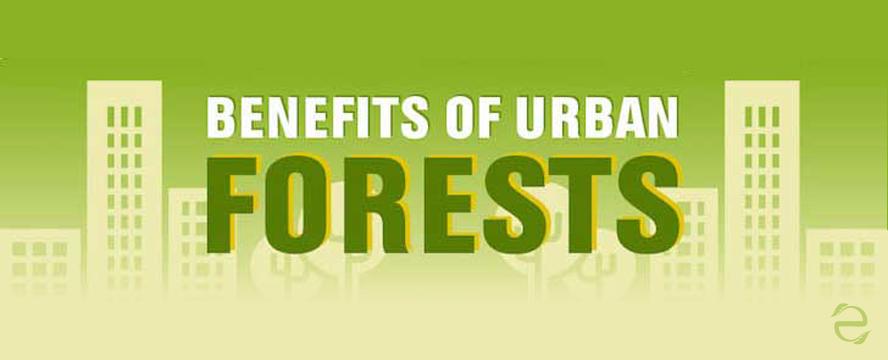 Urban Forestry Benefits [Infographic] | ecogreenlove