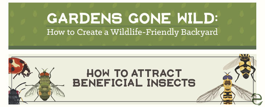 How to Create a Wildlife-Friendly Backyard [Infographic] | ecogreenlove