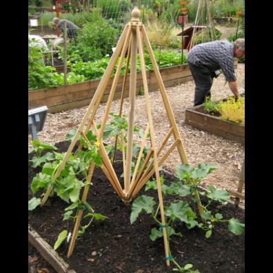 Cucumber support by AGA~mum on Flickr • Reusing Umbrellas   ecogreenlove