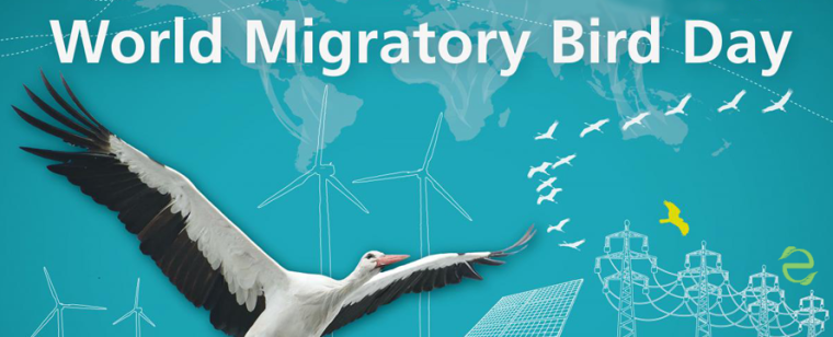 Environmental Dates: World Migratory Bird Day | ecogreenlove