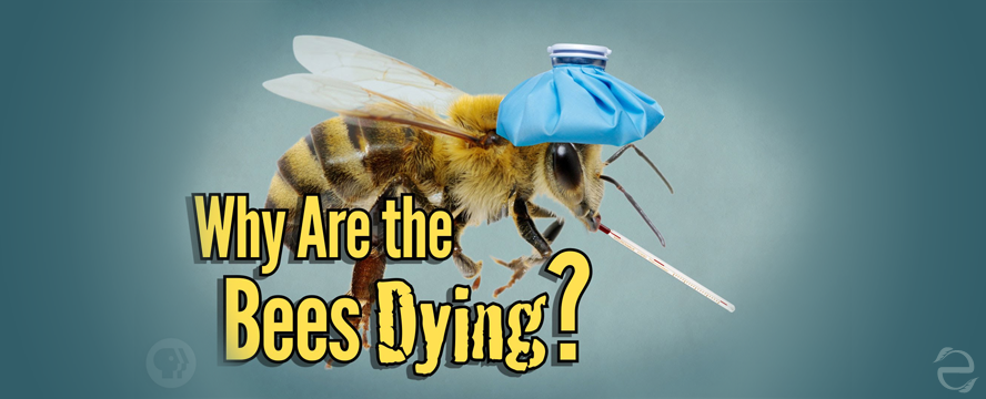 Why Are The Bees Dying? [Video] | ecogreenlove