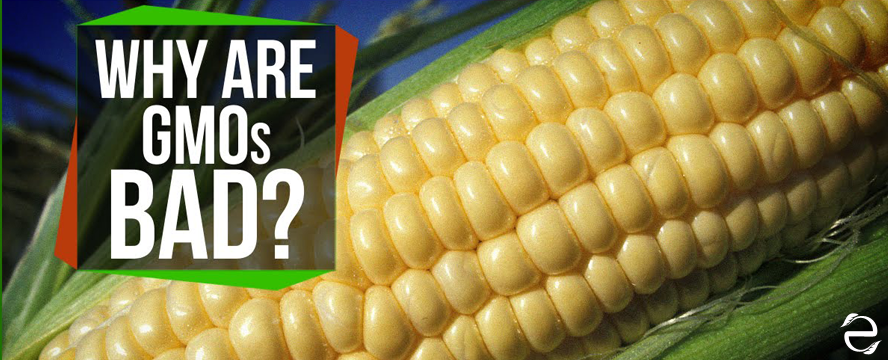 Why are GMOs Bad? [Video]