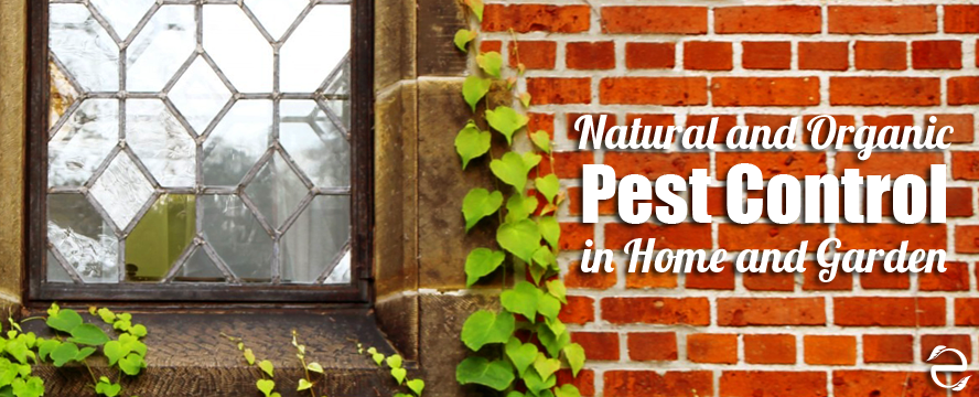 Natural and Organic Pest Control in the Home and Garden | ecogreenlove