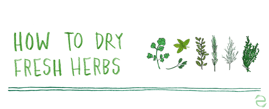 How to dry fresh herbs [Illustrations]