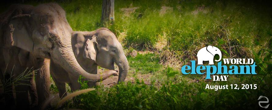 Environmental Dates: Elephant Day | ecogreenlove