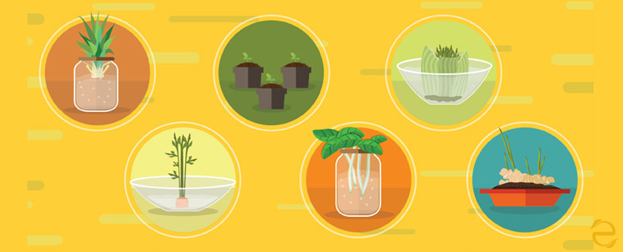 19 Foods you can Regrow from Scraps [infographic]