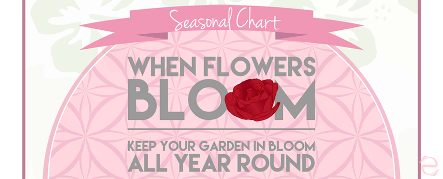 Guide for Colourful Gardens all year round [Infographic] | ecogreenlove