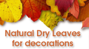 Reusing natural Dry Leaves for decorations