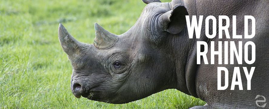 Environmental Dates: World Rhino Day | ecogreenlove