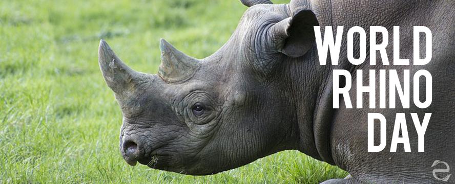 Environmental Dates: World Rhino Day | ecogreenlove