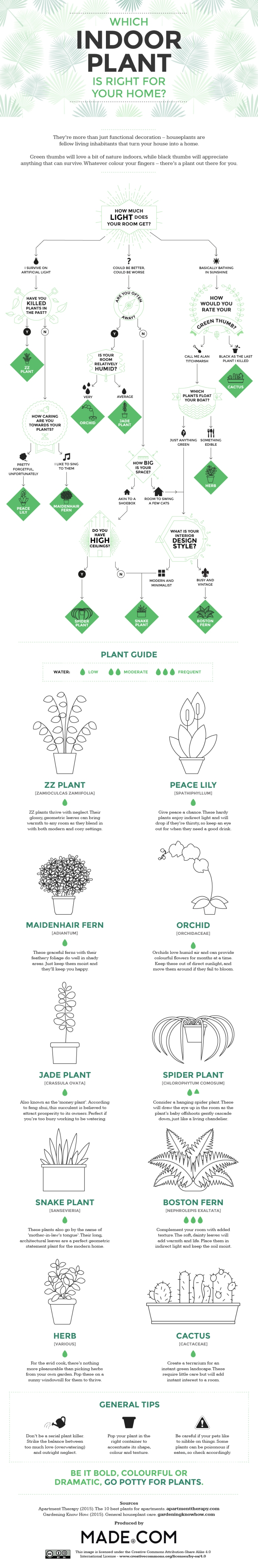 Which Indoor Plant is right for your Home? [Infographic] | ecogreenlove