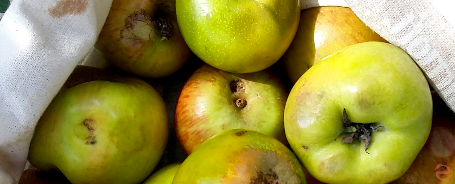 Reblogged: How to Eat Apples Nose to Tail | ecogreenlove