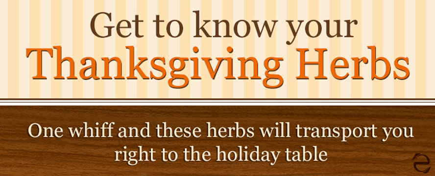 Thanksgiving Herbs [Infographic] | ecogreenlove