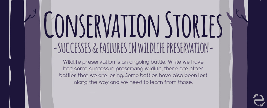Wildlife Preservation: Successes & Failures [Infographic] | ecogreenlove