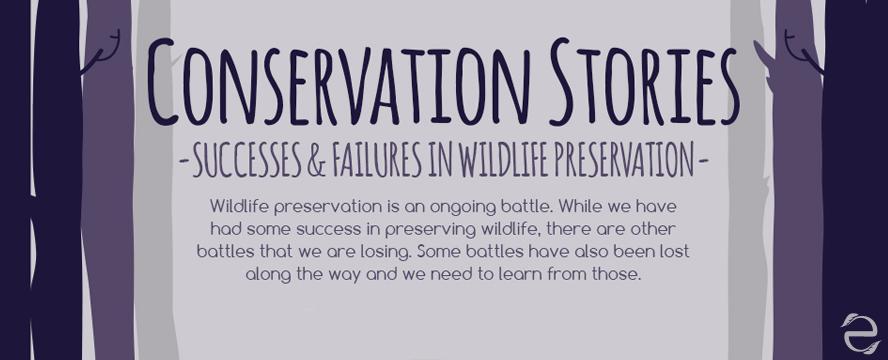 Wildlife Preservation: Successes & Failures [Infographic] | ecogreenlove