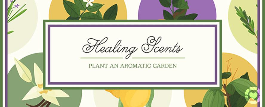 Plant an Aromatic Garden [Infographic] | ecogreenlove