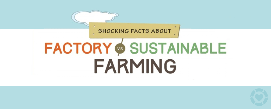 Factory vs. Sustainable Farming [Infographic] | ecogreenlove