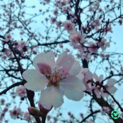 Signs of Spring | ecogreenlove
