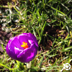 Signs of Spring | ecogreenlove