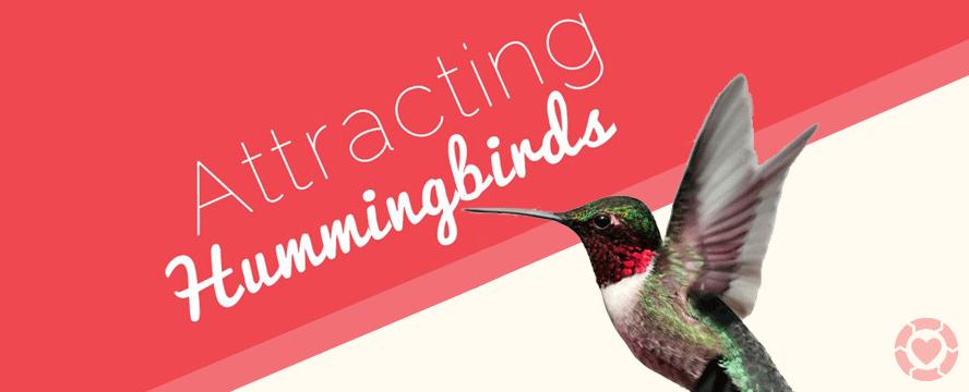 Attracting Hummingbirds [Infographic] | ecogreenlove