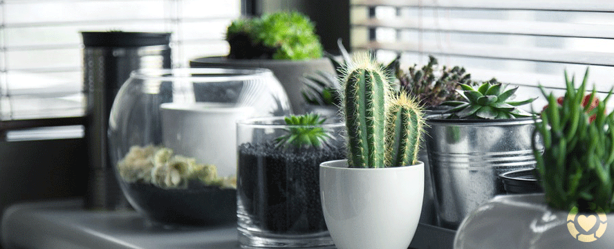 Unusual ways to display Indoor Plants [Infographic] | ecogreenlove
