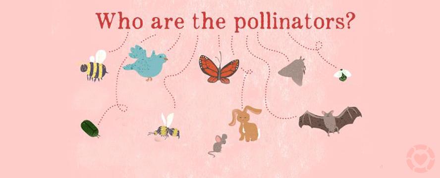 Who are the Pollinators? [Infographic] | ecogreenlove